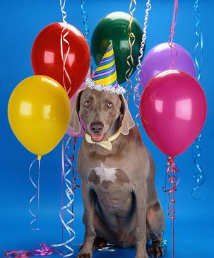 how to throw a birthday party for your dog or cat